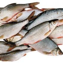 Как хранить свежую рыбу
